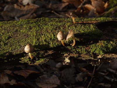 fungi growing on fallen tree trunk (1)