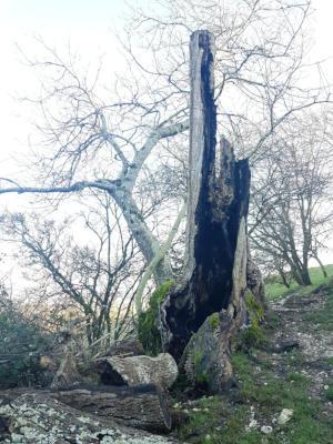 Along the bridlepath